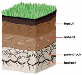 Class 7 exercise on soil freeguru helpline for What are the different layers of soil